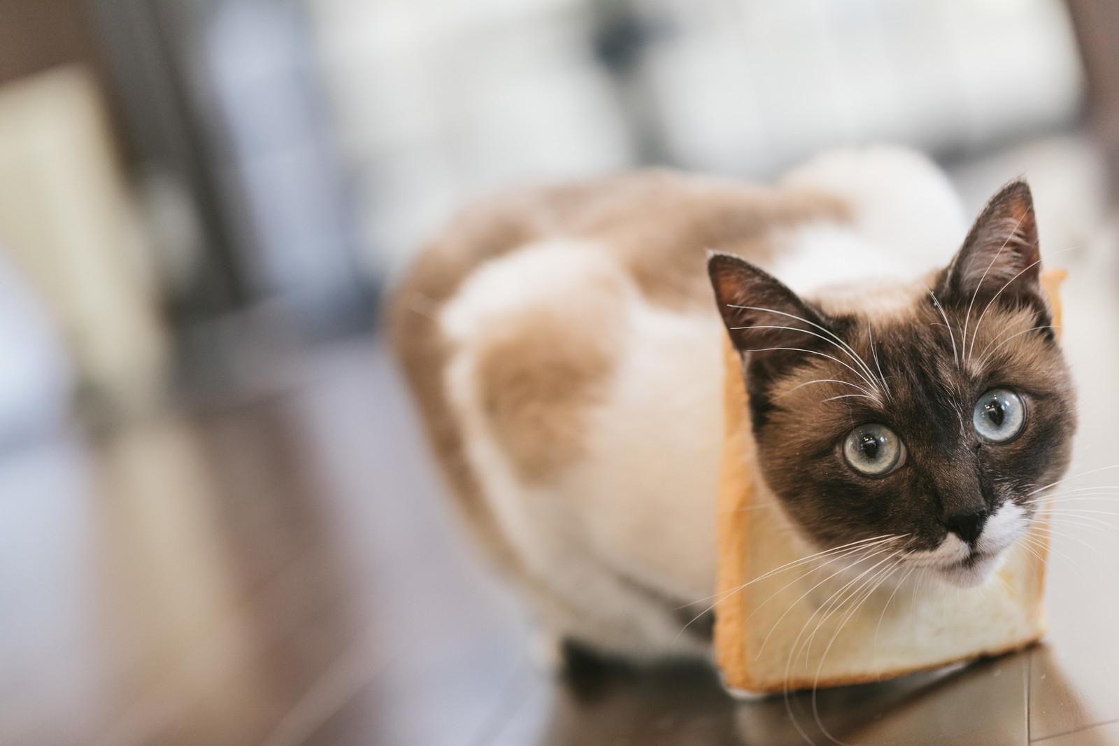 ACCAの食パン